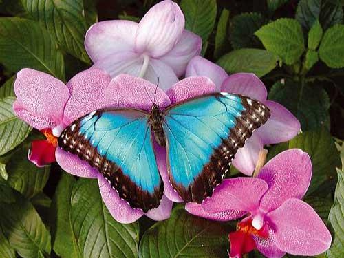 La salicaire recette nature for Papillons jardin botanique 2016